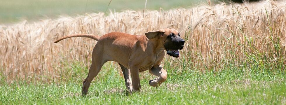 Se Il Cane Ha La Diarrea Cause E Consigli Di Alimentazione Blog